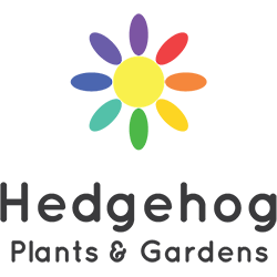 Hedgehog Plants & Gardens