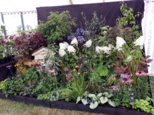 Sandringham Flower Show 2014